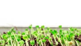 Växande gräs
