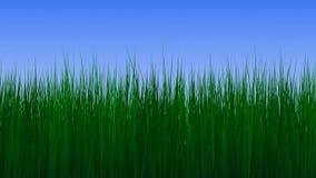 Växande gräs 3d