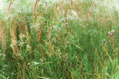 Växande grönt gräs royaltyfri bild