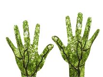 växande händer arkivfoto