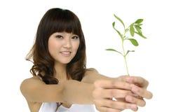 växande holdingväxtkvinna royaltyfria bilder