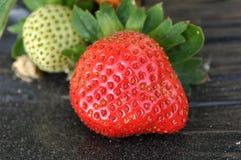 växande jordgubbe Fotografering för Bildbyråer