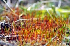 växande moss arkivfoto