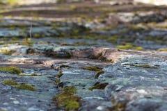 Växande mossa mellan att kliva stenar Royaltyfri Bild