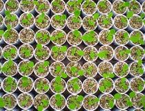 växande ny växt för livstid Arkivbild