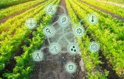 Växande organiska grönsaker med nya tekniker Utveckling av innovation och forskning Investera i lantbruk Studiekvalitet av arkivbild