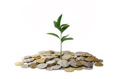 växande pengar för begrepp Royaltyfri Bild