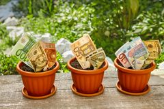 Växande pengar i blomkruka royaltyfria foton