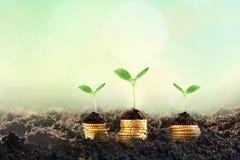 Växande pengar - växt på mynt - finans- och investeringbegrepp Utrymme för text royaltyfria bilder
