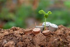 Växande pengarväxt för bakgrund på myntaffär arkivbild
