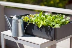 Växande rädisa och sallad i behållare på balkong grönsak gard arkivbild