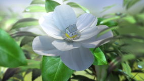 Växande schackningsperiod för magnoliablommatid med huset lager videofilmer