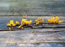Växande svampar Royaltyfri Fotografi