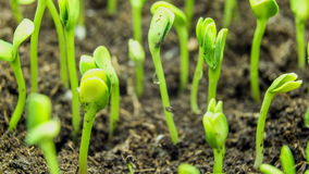 Växande tidschackningsperiod för grön växt