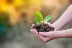 Växande träd älskar världen med våra händer Härligt överdåd royaltyfri bild