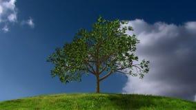 Växande träd med Timelapse moln stock illustrationer