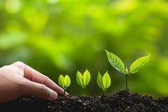 Växande trädledareträd som planterar träd, sparar världsbegrepp Royaltyfria Foton