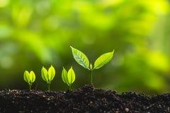 Växande trädledareträd som planterar träd, sparar världsbegrepp Arkivfoton
