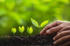 Växande trädledareträd som planterar träd, sparar världsbegrepp Royaltyfri Foto