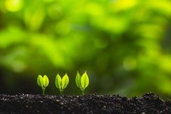 Växande trädledareträd som planterar träd, sparar världsbegrepp Arkivbilder