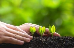 Växande trädledareträd som planterar träd, sparar världsbegrepp Fotografering för Bildbyråer