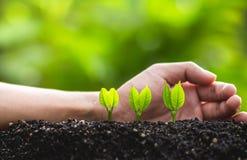 Växande trädledareträd som planterar träd, sparar världsbegrepp Arkivbild