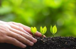 Växande trädledareträd som planterar träd, sparar världsbegrepp Royaltyfria Bilder
