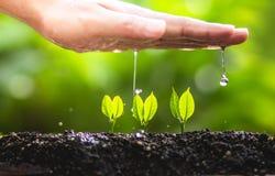 Växande trädledareträd som planterar träd, sparar världsbegrepp Royaltyfri Bild