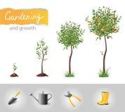 Växande tree vektor illustrationer