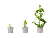 växande tree för dollar arkivfoton