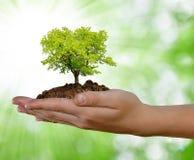 Växande tree i hand fotografering för bildbyråer
