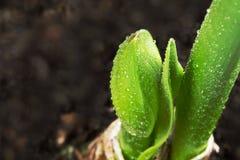 Växande växt Royaltyfria Foton