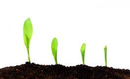 växande växt Royaltyfri Fotografi
