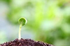 växande växt Fotografering för Bildbyråer