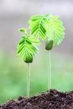 växande växt Arkivfoton