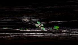 växande växt Arkivfoto