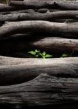 växande växt Arkivbilder