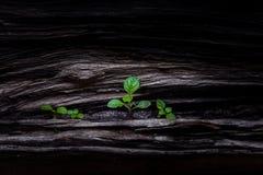 växande växt Arkivbild