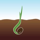 växande växt Grodden växer Arkivfoton