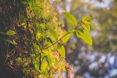 Växande växt i annat träd Fotografering för Bildbyråer