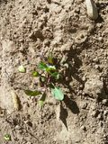 Växande växt i min hem- trädgård Royaltyfri Foto