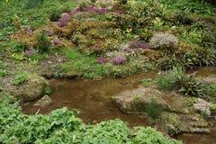 Växande växtbotanisk trädgård för blad royaltyfria bilder