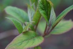 Växande växtbotanisk trädgård för blad arkivfoton