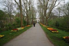 Växande växtbotanisk trädgård för blad arkivbild