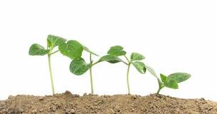 växande växter Arkivbild