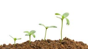 växande växter Royaltyfri Foto