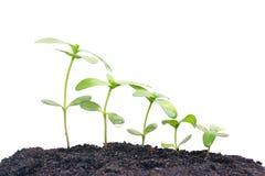 växande växter Royaltyfria Foton