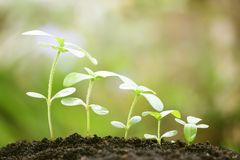 växande växter Fotografering för Bildbyråer