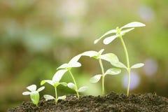växande växter Arkivbilder