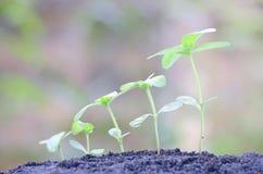 växande växter Royaltyfri Fotografi
